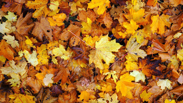2019 yard waste collection, leaf pick up dates for Metro Detroit - WDIV ClickOnDetroit