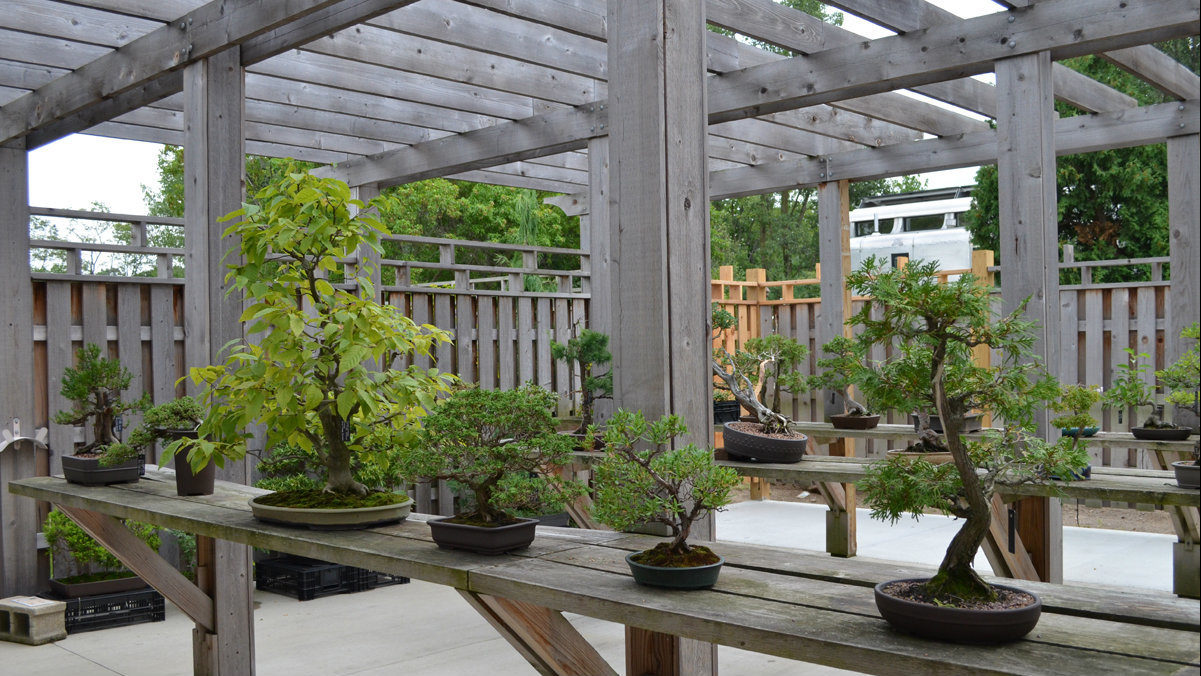 Marvel At The Art Of Miniature Trees At Ann Arbor Bonsai Society Show Sale